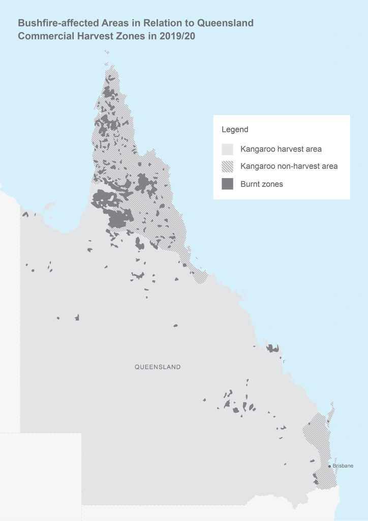 Bushfire-affected areas in relation to Queensland Kangaroo harvest zones in 2019/20